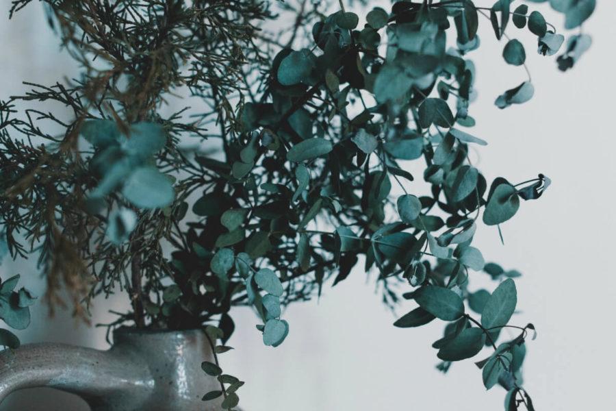 Ingredient Spotlight: Eucalyptus Oil