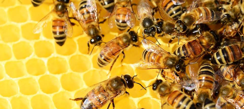 Ingredient Spotlight: Australian Beeswax – the Best in the World