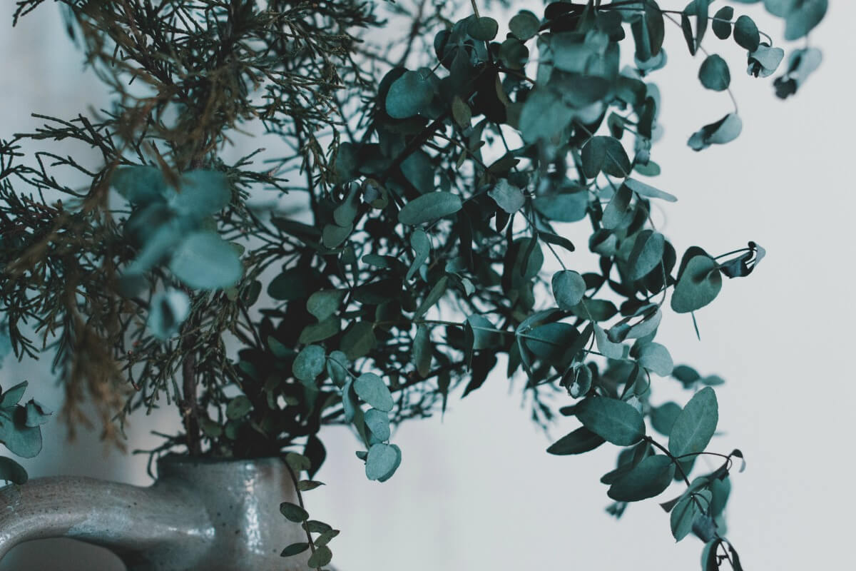 Ingredient Spotlight: Eucalyptus Oil