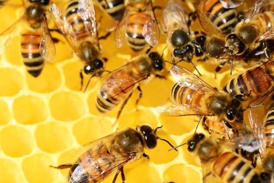 Ingredient Spotlight: Australian Beeswax – the Best in the World