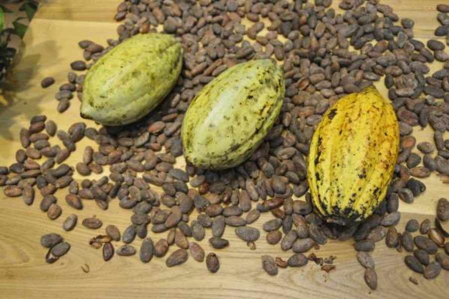 Ingredient Spotlight: 7 Little-known Benefits of Cacao
